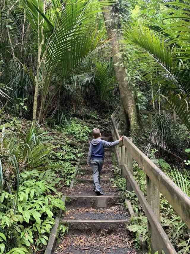 Little boy walking up steps in the jungle on the trail from the base of Bridal Veil Falls in Raglan New Zealand.
