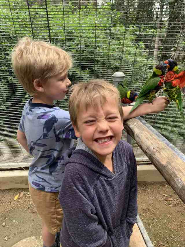 Boys feeding birds at Wild Animal Park