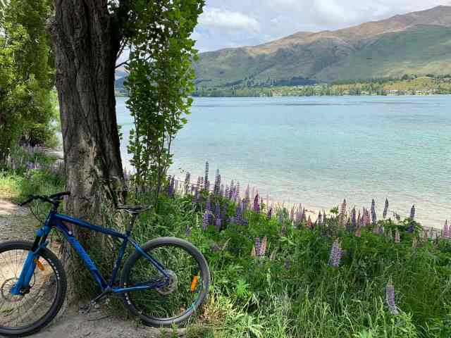 biking in Wanaka