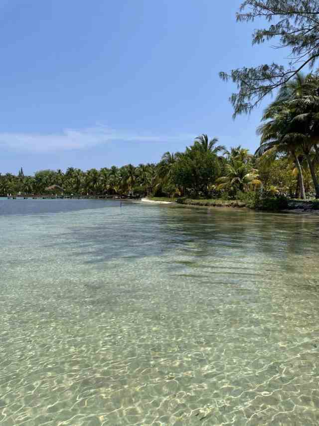 palm trees and clear water at south water caye