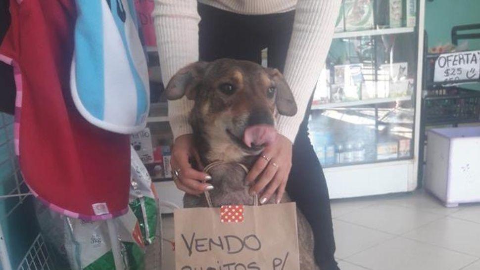 """Perrito con cáncer vende """"busitos"""" para pagar el tratamiento"""