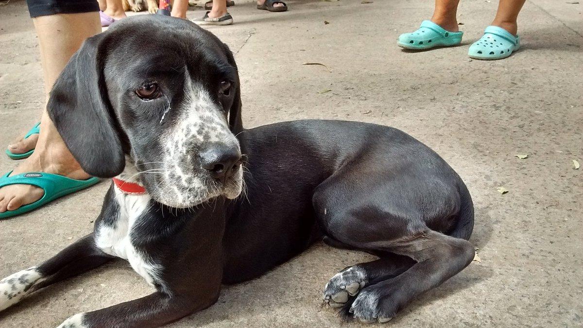 En el parque San Martín habrá una jornada para adoptar mascotas