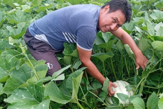 Huertas comunitarias: comunidades wichis realizaron sus primeras cosechas