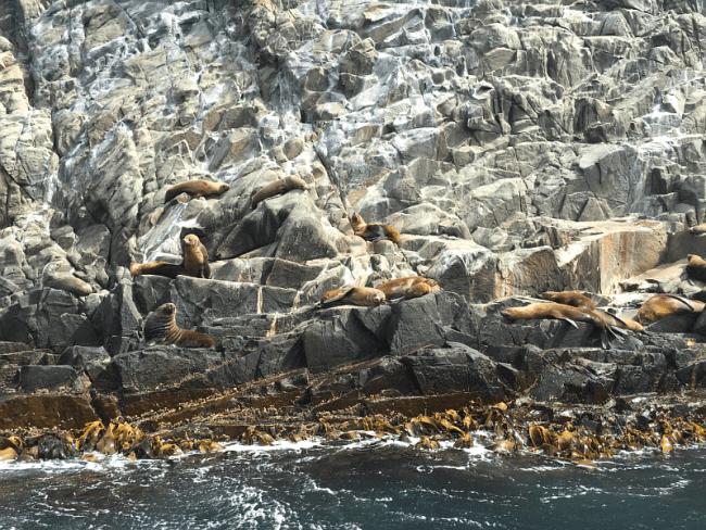 A tour of Bruny Island | Saltbush Avenue