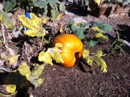 Salt Creek Garden pumpkin!