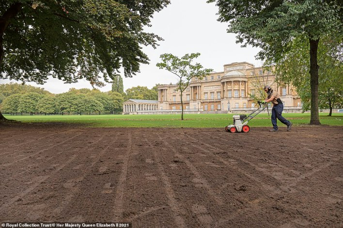 Pictured: A member of the gardening team tends to the palace lawn. It requires a lot of care to keep it perfect condition whilst accommodating the the thousands of visitors who walk across it each year