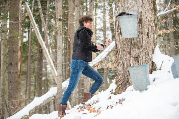 Kate Whelley McCabe, a co-founder of Vermont Evaporator Company, which saw customer demand double during the pandemic, tapping trees in a neighbor's yard near Montpelier, Vt.