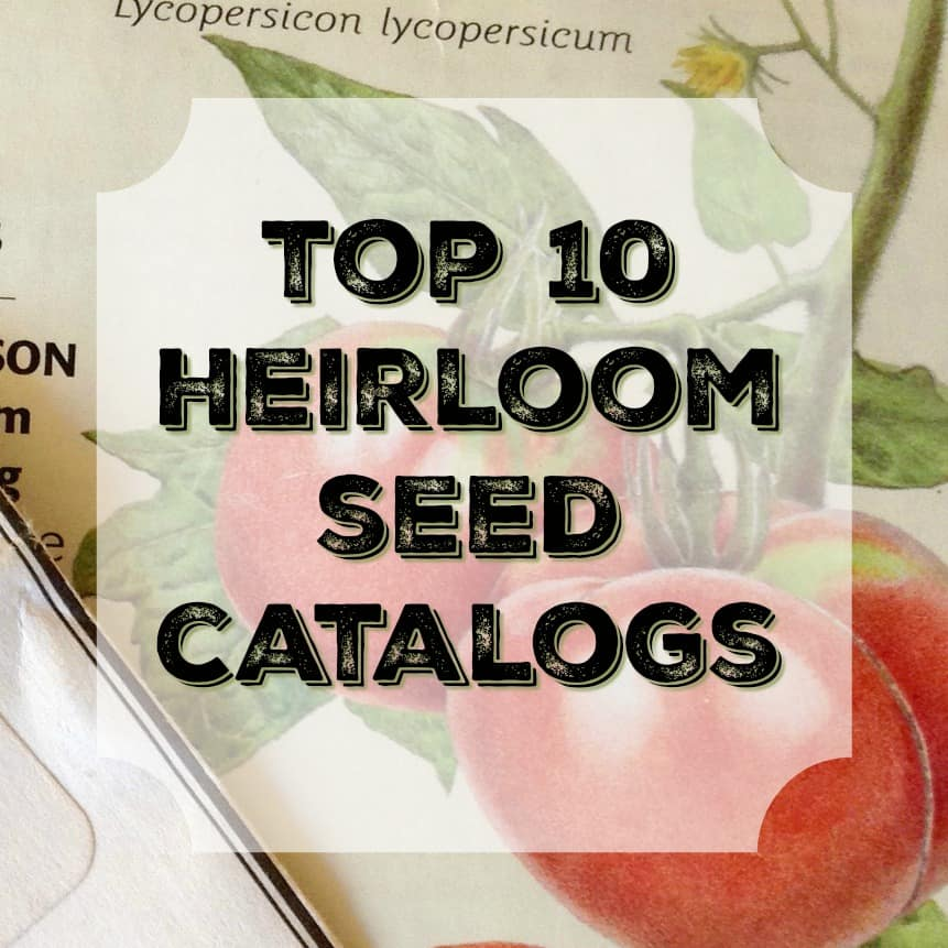 Top 10 Heirloom Seed Catalogs