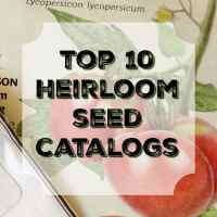Top 10 Places to Order Heirloom Seeds