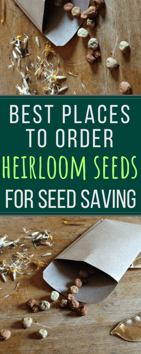 Great list of the best companies where you can order heirloom seeds.