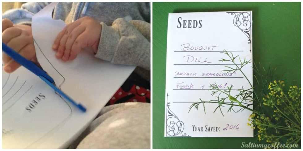 seeds-6