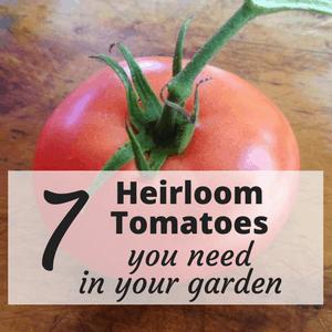 best heirloom tomatoes
