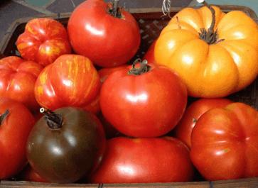 Best tasting heirloom tomatoes