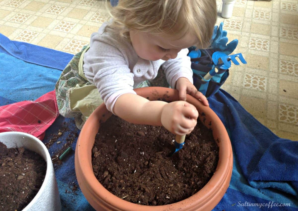 how to start seedlings for free