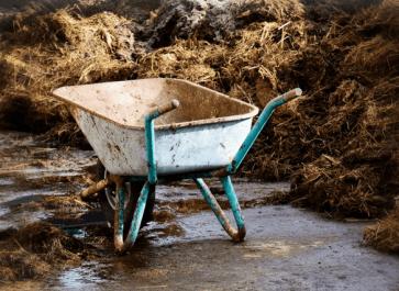 compost chicken manure in 18 days