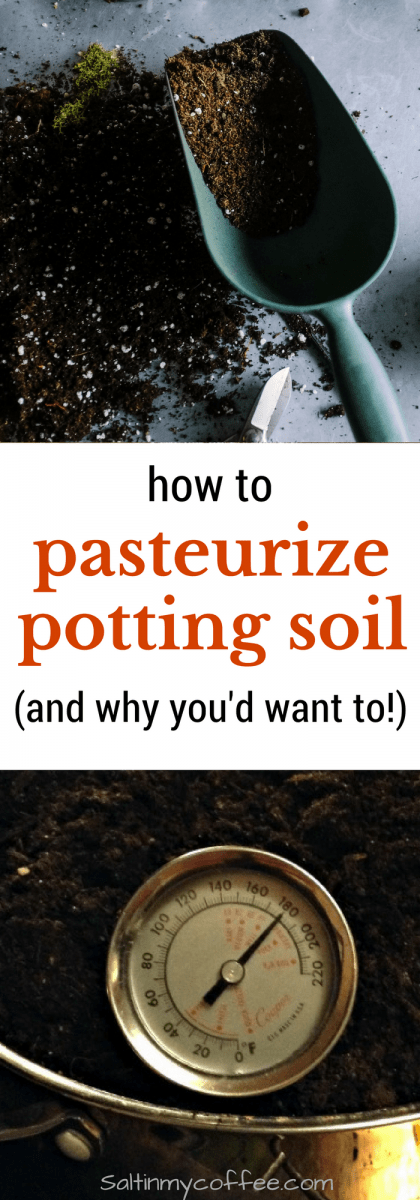 Here's how to pasteurize potting soil...so you can avoid the nightmare I dealt with last seed-starting season!!