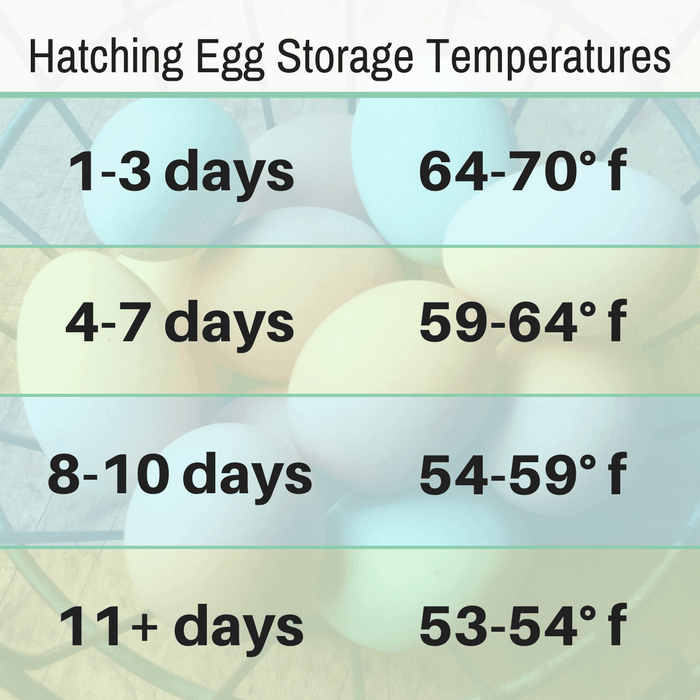 best temperature for storing hatching egg