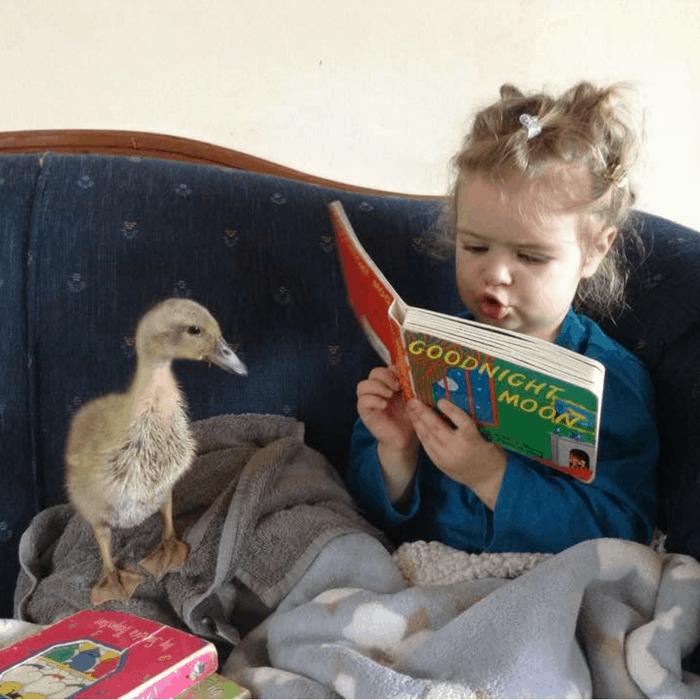 raising ducks with kids