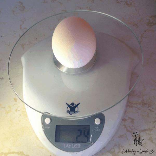Welsh Harlequin duck egg