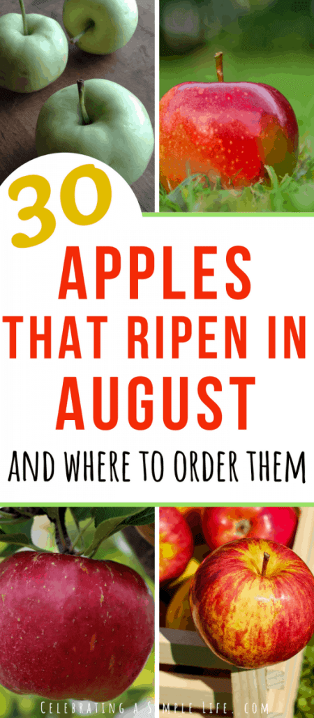 apples that ripen in August
