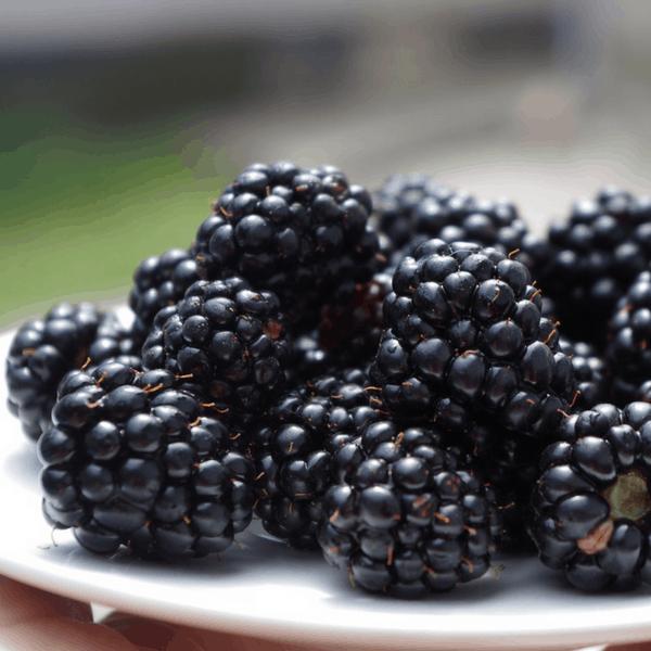 best way to freeze blackberries