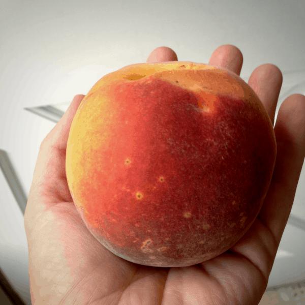 hand holding a large fresh peach