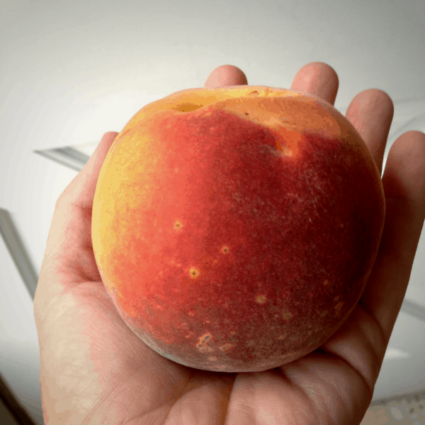 hand holding a large fresh peach