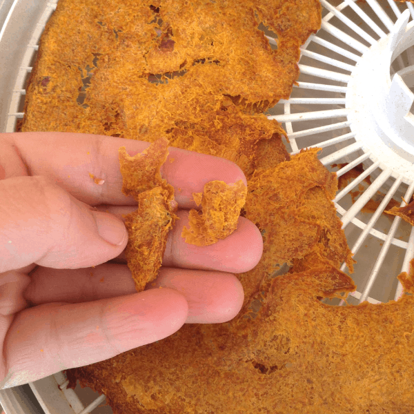 drying pumpkin puree in a dehydrator for pumpkin flour