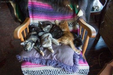 Kittens on Salt Spring Island