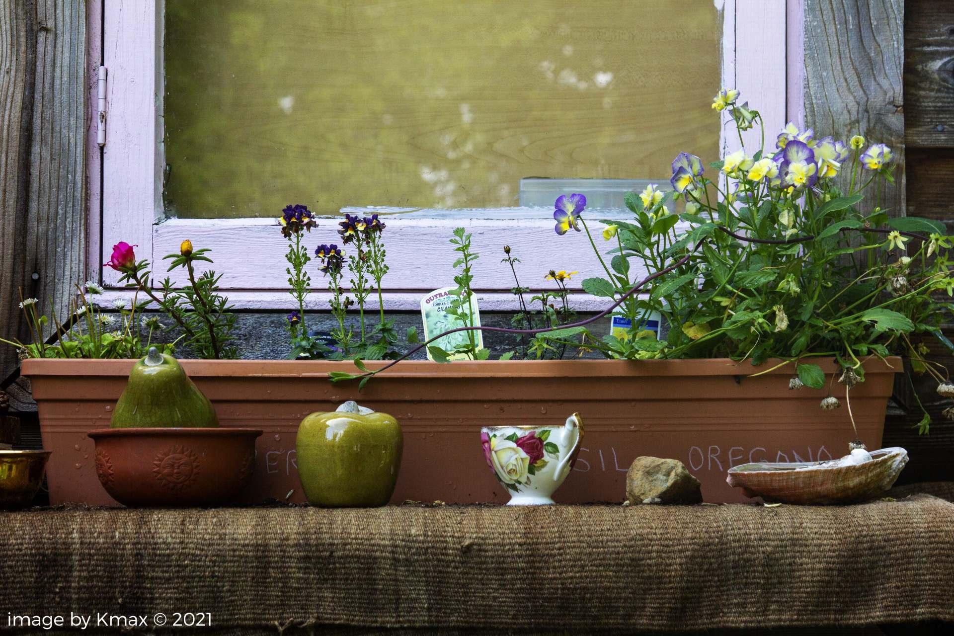 window box with tea cup Zen's Garden