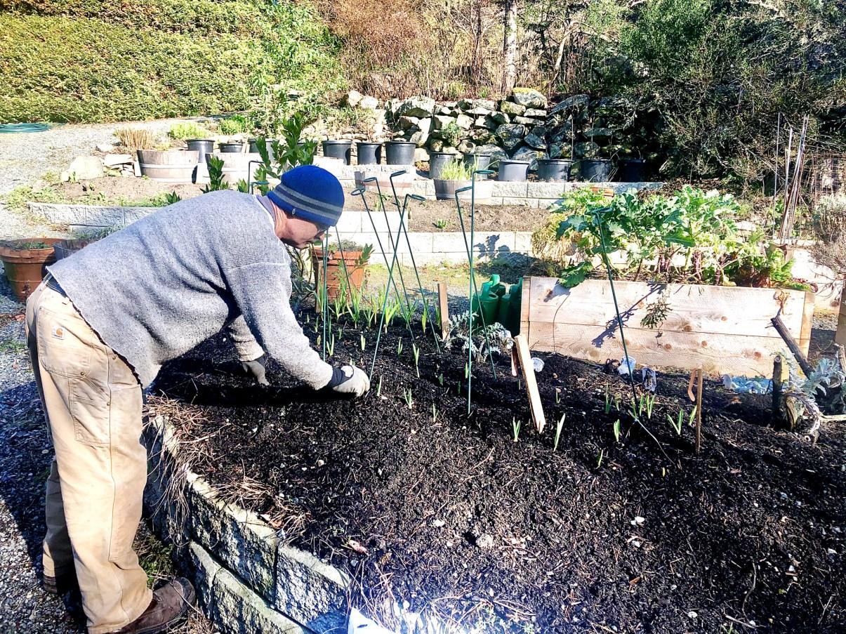 Salt Spring Island Gardening Service