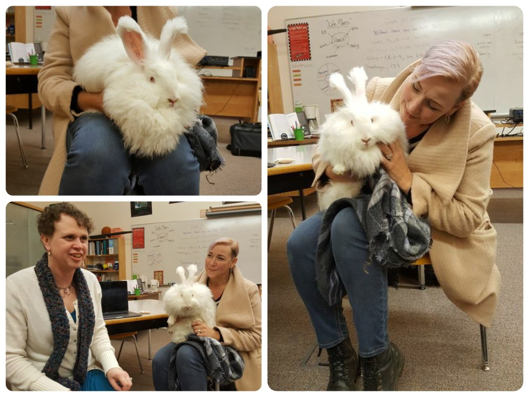 Visit from German angora bunny with owner Skye and Bella