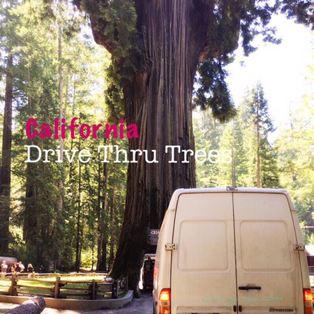 Trying to drive a sprinter van though chandelier drive they tree