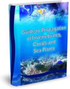 Saltwater Aquarium Fish and Coral Guide to Propagation of Invertebrates, Corals and Sea Plants