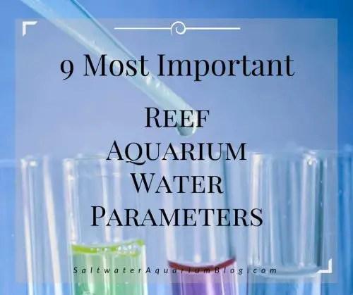 9 most important reef aquarium water parameters