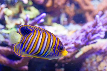 colorful saltwater fish