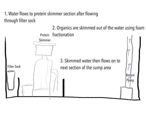 protein skimmer placement and function in a reef aquarium sump