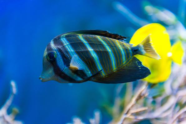 Massive Selection of Saltwater Fish in Las Vegas, Nevada
