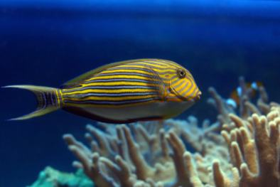 Tropical Saltwater Fish - Aquatic Treasures of Southern, Nevada