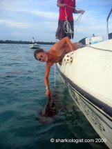 Holding on to the dorsal fin of a juvenile Tiger Shark (Galeocerdo cuvier) before I.D. tagging. South Bimini, Bahamas. (Photo credit: Joris Van Kessel)