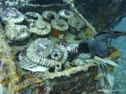 Gas Mask & Ammunition, Helmet Wreck, Palau