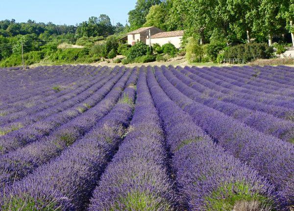 Tag 17: Lavendel de la Provence