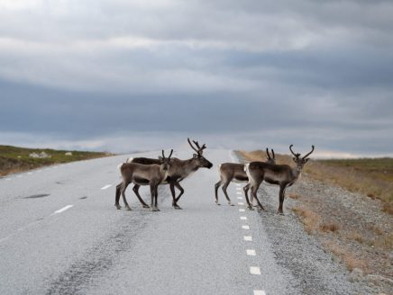 Nordnorwegen Vildmarksvägen