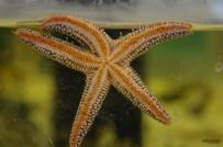 ELC aquariums (3)