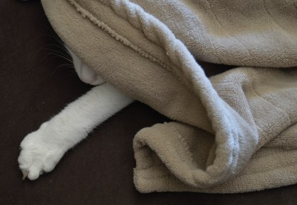 During the last cold snap, under the electric blanket