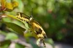 Naples BG Butterflies (13)