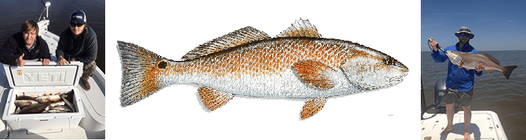 Louisiana Redfish