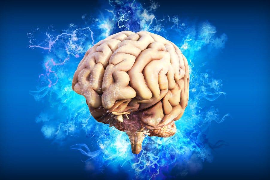 cerebro psicologia