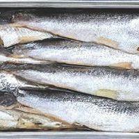 Sardina: Su precio no va acorde con sus propiedades gustativas y nutricionales