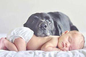 Toma Nota, Los bebés que crecen con perros se enferman menos